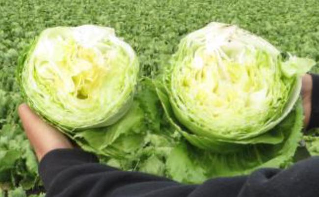 lettuceBeforeAfter