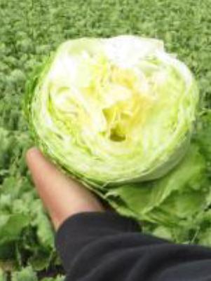 lettuceBefore