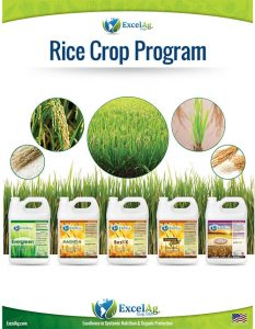 RICE-PROGRAM-Sell-Sheet