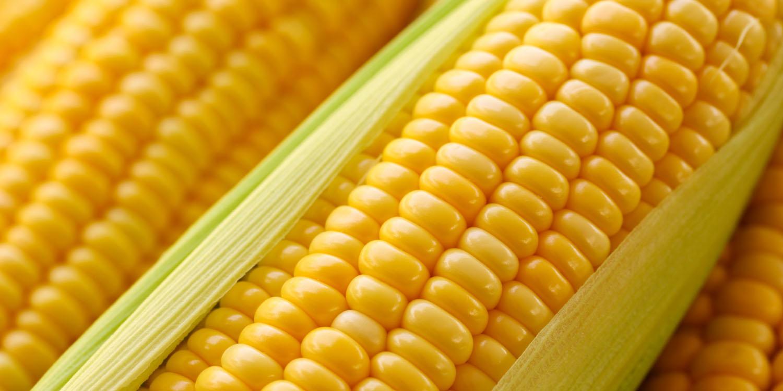 nipheaders-corn
